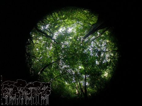 Imagen hemisférica y esquema representativo de una cobertura vegetal densa