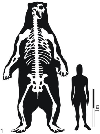 Figura comparativa del tamaño de los gigantescos osos