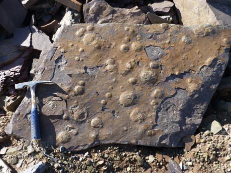 Los registros fósiles hallados son cientos (2)