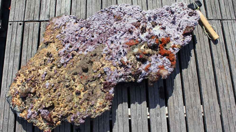 Roca muestreada en plataforma_web
